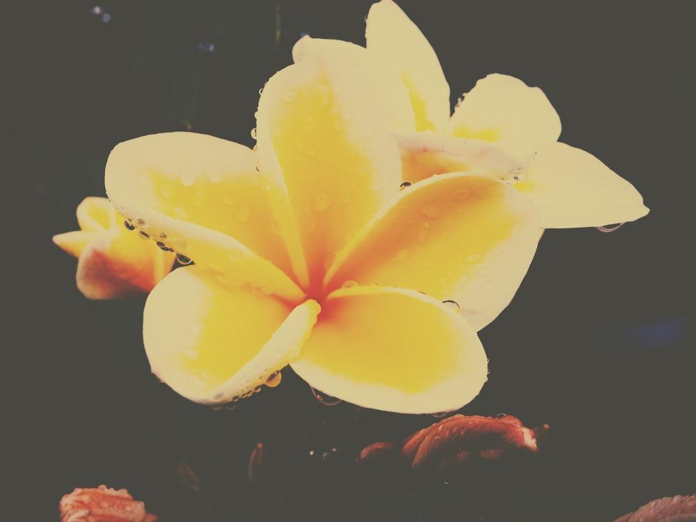 yellow-flower-1285109_1920