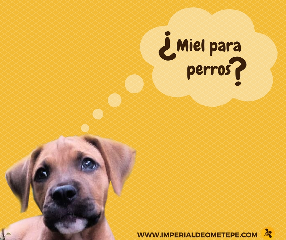 Miel para perros (1)